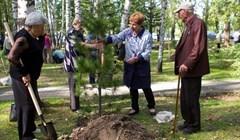 Ветераны высадили Лес Победы в Лагерном саду Томска