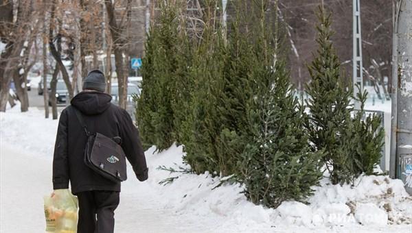 Первые елочные базары в Томске откроются 10 декабря