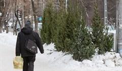 Томсклесхоз начал продажу елок по сниженным ценам в районах области