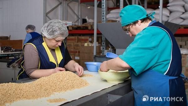 Окно в Европу: как кедровый орех из Томска завоевывает мировой рынок