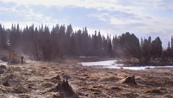 Черный лесоруб сбил трактором полицейского вТомской области