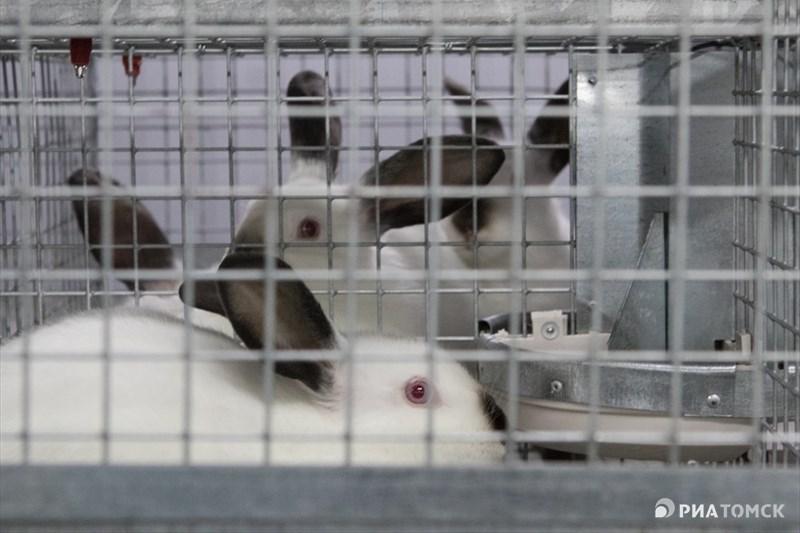 Продавать свою продукцию семья Куриленок планирует на ярмарках выходного дня в Томске, цена за килограмм свежего мяса составит от 380 рублей. Ожидается, что к 2017 году ферма выйдет на полную проектную мощность в 1,2 тысячи кроликоматок и будет давать до 18 тонн мяса в год.