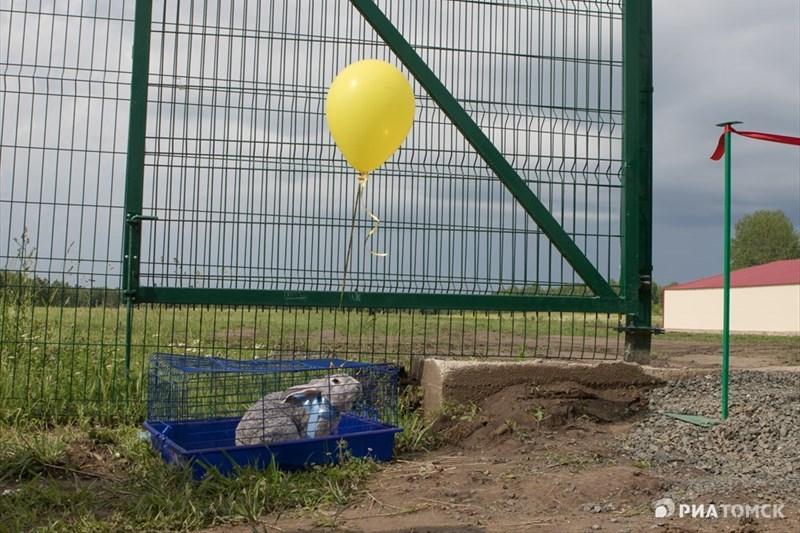 Ферма в Ново-Кусково в ближайшие годы будет расширяться – в общей сложности, здесь может появиться до 10 корпусов. По оценкам томских властей, поголовье кроликов составит до 7 тысяч животных.