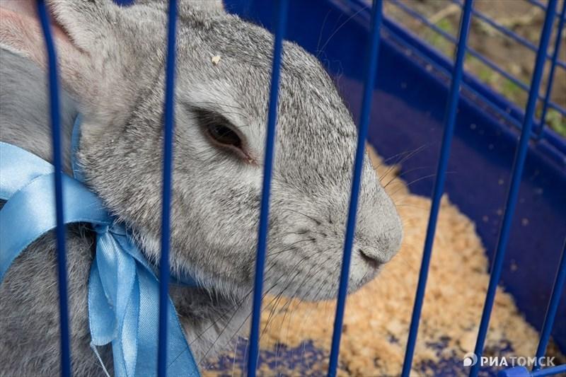 В 2008 году семье Куриленок подарили их первого кролика Машу породы серый великан. С нее, вспоминают Елена и Андрей, и началась их большая кролиководческая ферма. Также в хозяйстве семьи Куриленок живут козы, овцы, коровы, куры и утки.