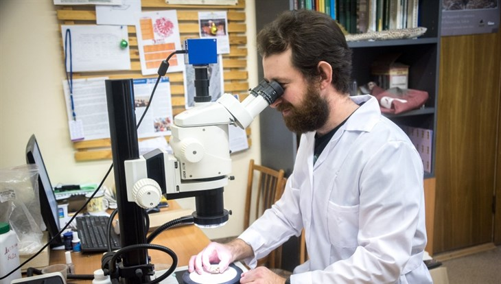 Томские ученые изучили первое найденное в РФ яйцо динозавра