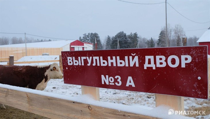 Российско-китайский инвестпроект повыращиванию герефордов реализован вТомской области