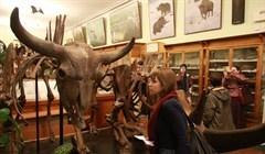 Входите, открыто: какие музеи можно посетить бесплатно в День томича