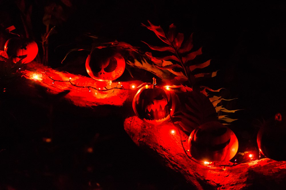 Ночь никтогилофобии (*боязнь ночного леса) впервые прошла в Ботсаду Томского госуниверситета в Хеллоуин. Сотрудники и волонтеры водили гостей по таинственному тропическому лесу, где бродили жуткие персонажи, словно сбежавшие из фильмов ужасов, и рассказывали леденящие кровь факты о растениях.