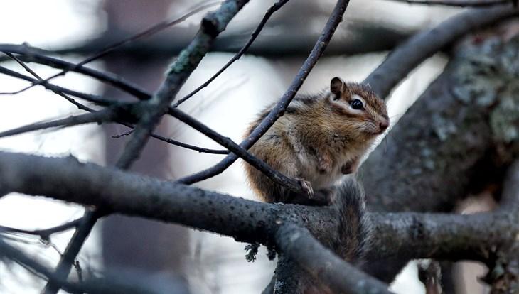 Прохладная и ветреная погода сохранится в Томске во вторник