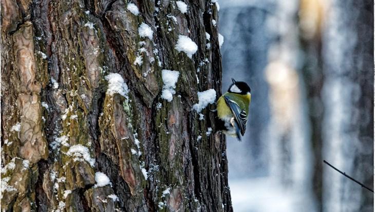 Легкий мороз и порывистый ветер ожидаются в Томске в среду