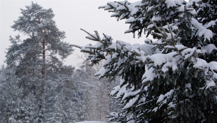 Синоптики обещают томичам небольшой снег и ветер до 13 м/с в среду