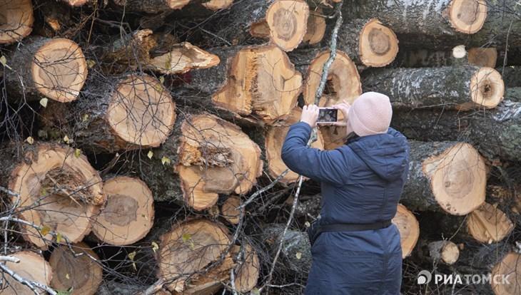 Новый парк или уникальный лес: из-за чего спор в Академгородке Томска