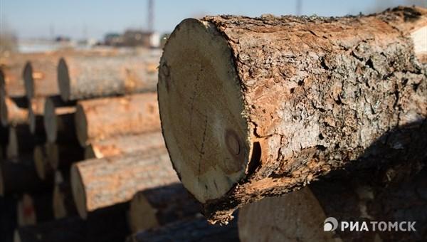 Шесть томичей пойдут под суд за рубку 316 сосен на 7,7 млн руб