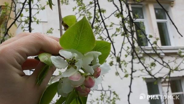 Синоптики не ожидают осадков в Томске в среду