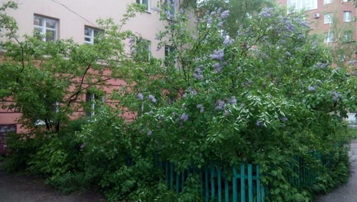Похолодание ожидается в Томске в среду