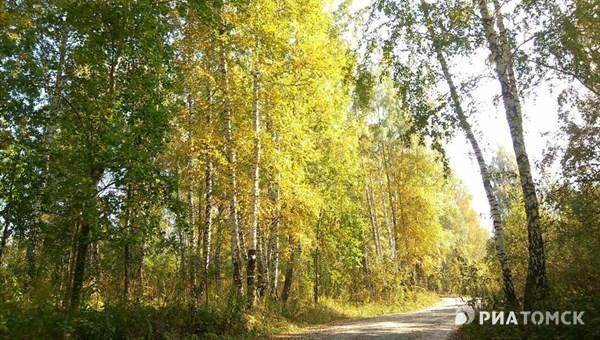 Синоптики прогнозируют дождь и прохладную погоду в Томске во вторник
