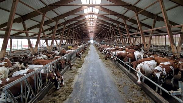 Томская область получит 73 млн руб на льготное кредитование аграриев