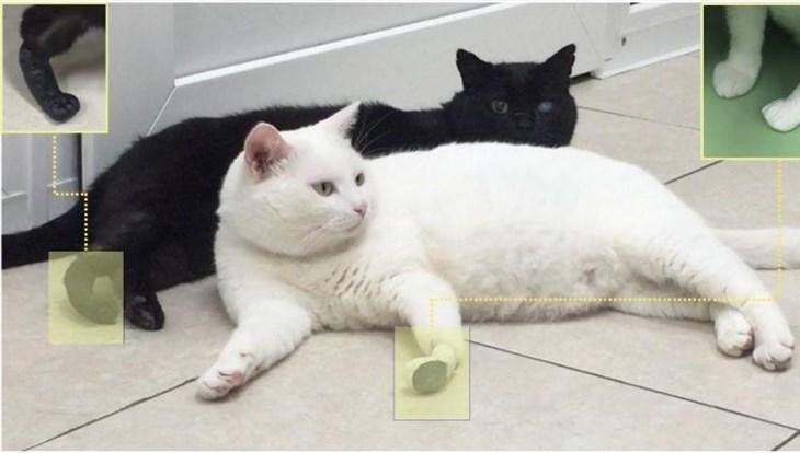 Искусственные лапы, созданные в Томске, прижились у трех котов