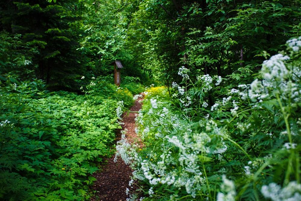 Знакомить посетителей с зелеными экспонатами будут специалисты лаборатории редких растений и лаборатории цветоводства Ботсада ТГУ. Записаться на экскурсии по экологической тропе В Заповедном парке, которые проходят по четвергам, можно по телефону 529-816.