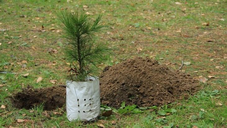 В Томской области высадят в мае более 25 тысяч деревьев