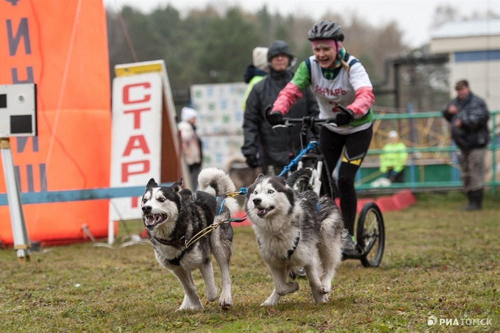Участники соревновались в трех основных дисциплинах. Первая – скутер, когда собака буксирует самокат.