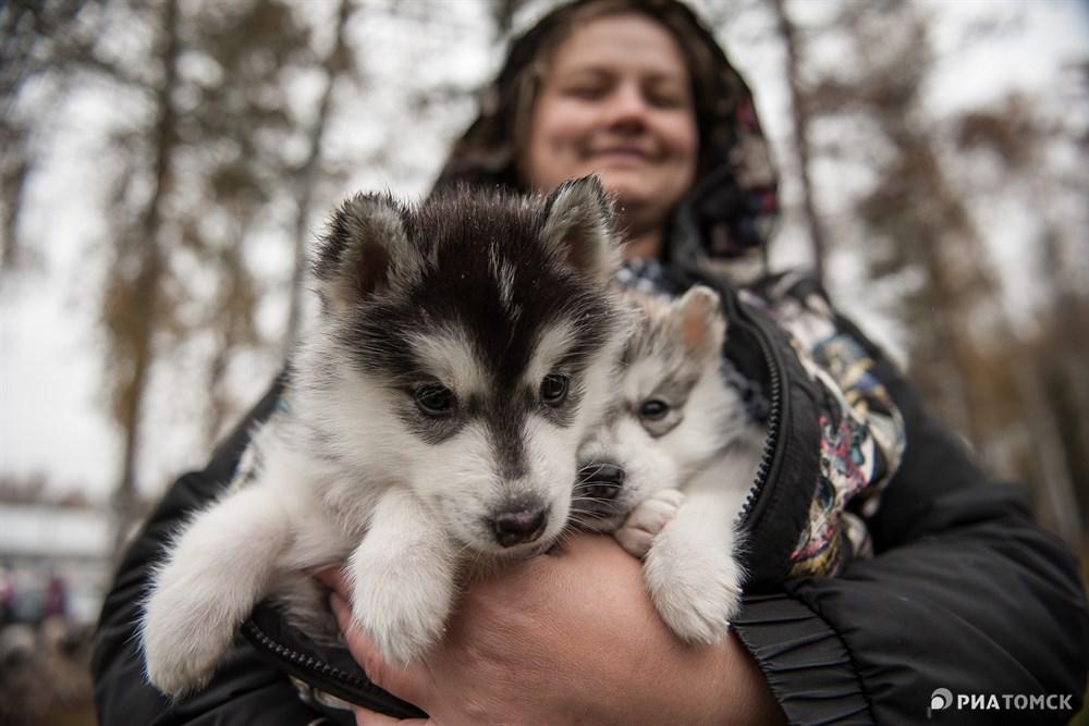 Для всех участников были установлены ограничения по возрасту: собак выпускали на трассу в возрасте от двух лет. Поэтому эти малыши пока еще среди зрителей.