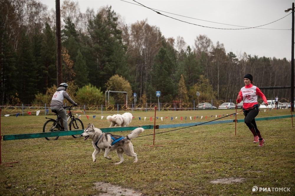 Каникросс – собака тянет за собой бегущего спортсмена.