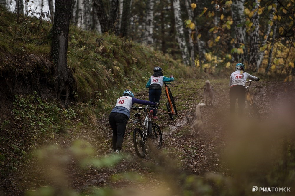 Затащить велосипед в гору по скользкой земле мохнатым напарникам было не под силу.