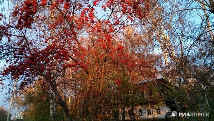 Заморозки до минус 5 градусов ожидаются в Томске 12-13 сентября