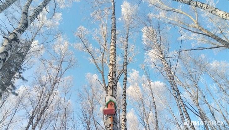 Вторая декада декабря в Томской области будет теплой и малоснежной