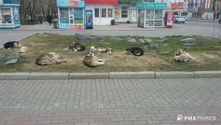 Четверг в Томске ожидается холодным