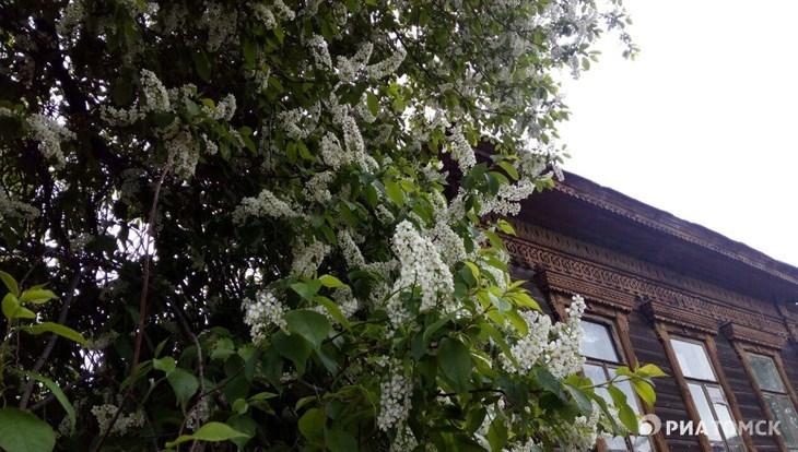 Теплая погода сохранится в Томске в пятницу, осадков не ожидается