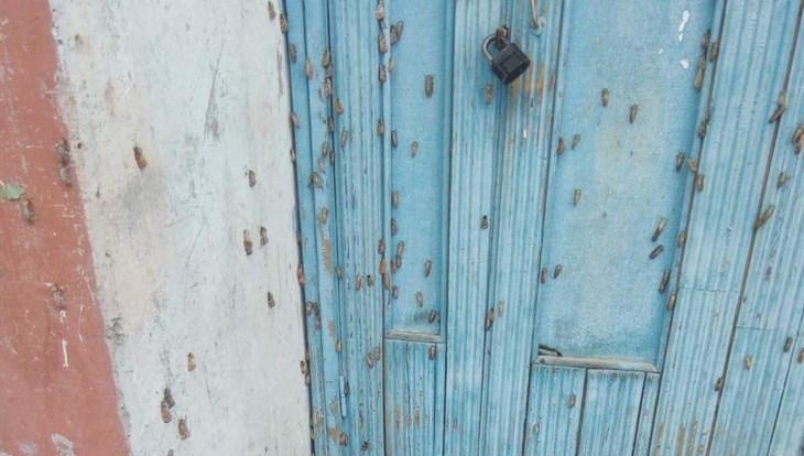 Нашествие шелкопряда зафиксировано в томском Кедровом